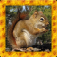 Squirrel Simulator 3D app icon