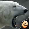Jigsaw Wonder Polar Bears for Kids app icon