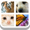 Close Up Animals 2015 app icon