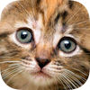 Smart Puzzle Cats & Kittens HD app icon