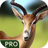 Survive in Jungle Pro iOS Icon