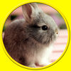 Exciting rabbits for kids no ads iOS Icon