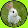 Exceptionnal rabbits for kids no ads app icon