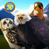 Wild Bird Survival Simulator Full icon