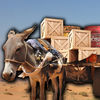 Donkey Cart Driver App Icon