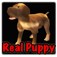 Real Puppy 3D app icon