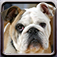 Dogs iOS icon