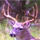 Deer Calls & Sounds iOS icon