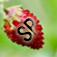 Strawberry Picking App Icon