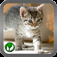 Cat ■ mini-games app icon