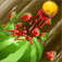 Fruit Shooter Pro iOS Icon