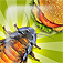 IBugs Invasion  Top & Best Game for Kids and Adults app icon