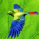 Forest Birds app icon