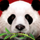 Wild Panda casino slot game App Icon