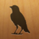 Blackbird! App Icon