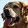 Dog Breed Pics Quiz app icon