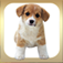 A Pet Puppy Booth for iPhone app icon