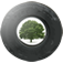 Trees for Cars App