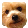 Yippie Yorkie app icon