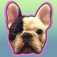 Manny - The Flying Frenchie app icon