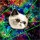 Trippy Kitty! app icon