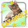 Cat-opoly icon