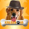 Golden IO
