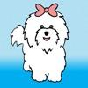 My Coton Dog