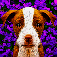 Dogistry app icon