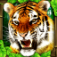 Tiger Simulator iOS Icon