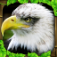 Eagle Simulator app icon