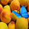Hungry Butterfly App Icon