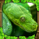 Snake Simulator iOS Icon