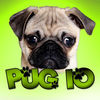 Pug IO iOS Icon
