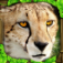 Cheetah Simulator App Icon