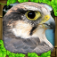 Falcon Simulator App Icon