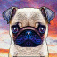 Puppystry app icon