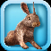 Bunny Simulator App Icon