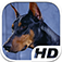 Doberman Simulator HD Animal Life app icon