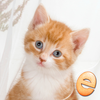 Jigsaw Wonder Kittens Puzzles for Kids app icon