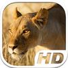 Lioness Simulator HD Animal Life app icon