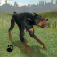 Dog Survival Simulator app icon