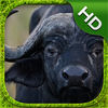 Cape Buffalo Simulator app icon