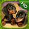 Dachshund Simulator iOS Icon