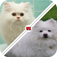 Tic Toc: Cat or Dog app icon