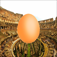 Egg in Rome iOS Icon